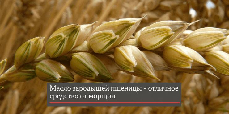 масло-зародышей-пшеницы